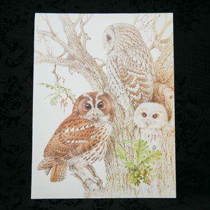 Vintage 1981 Tawny Owl Wildlife Print DDL167